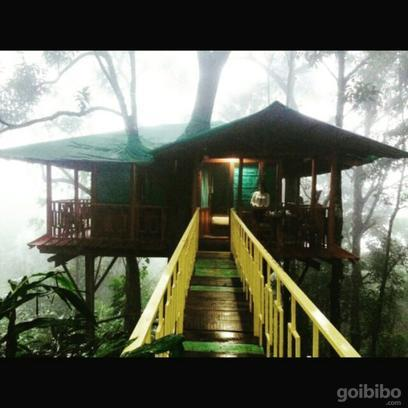 Dream Catcher Plantation Munnar - Reviews, Photos & Offers